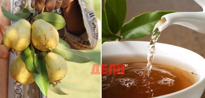чай от листа на гуава срещу рак