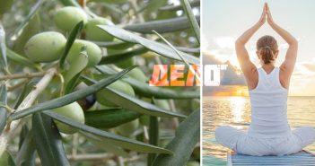маслинови листа за здраво тяло