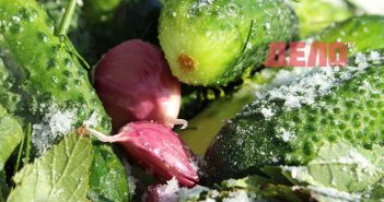 салата от краставици и чесън бори холестерола
