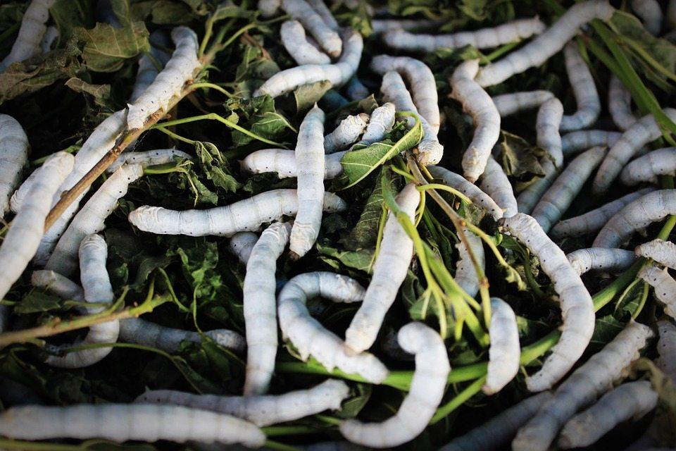 това растение бяла черница лекува много болести