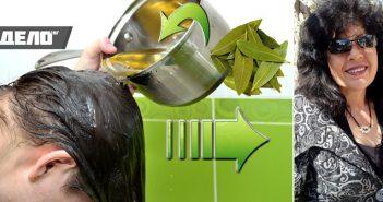 рецепта с дафинов лист за гъста коса