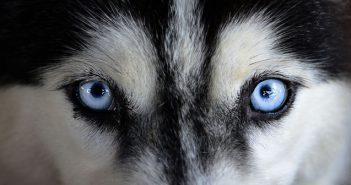 Кучета, далтонисти, цветове. Какво виждат кучетата?