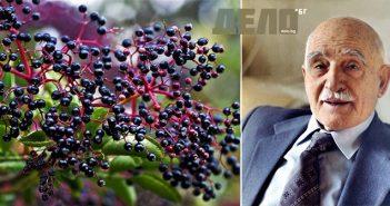 рецепта за силен имунитет с черен бъз на Петър Димков