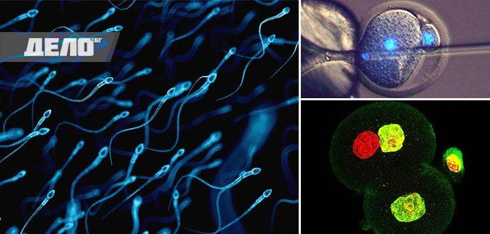 оплождане без яйцеклетка