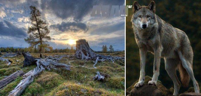 """Какво се случва в горите край АЕЦ """"Чернобил""""? Дали дивата фауна в района не е резултат от радиацията?"""