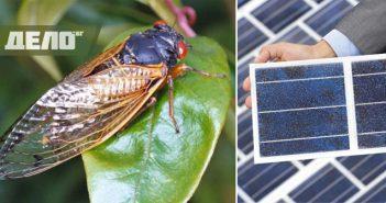 цикади, слънчеви панели