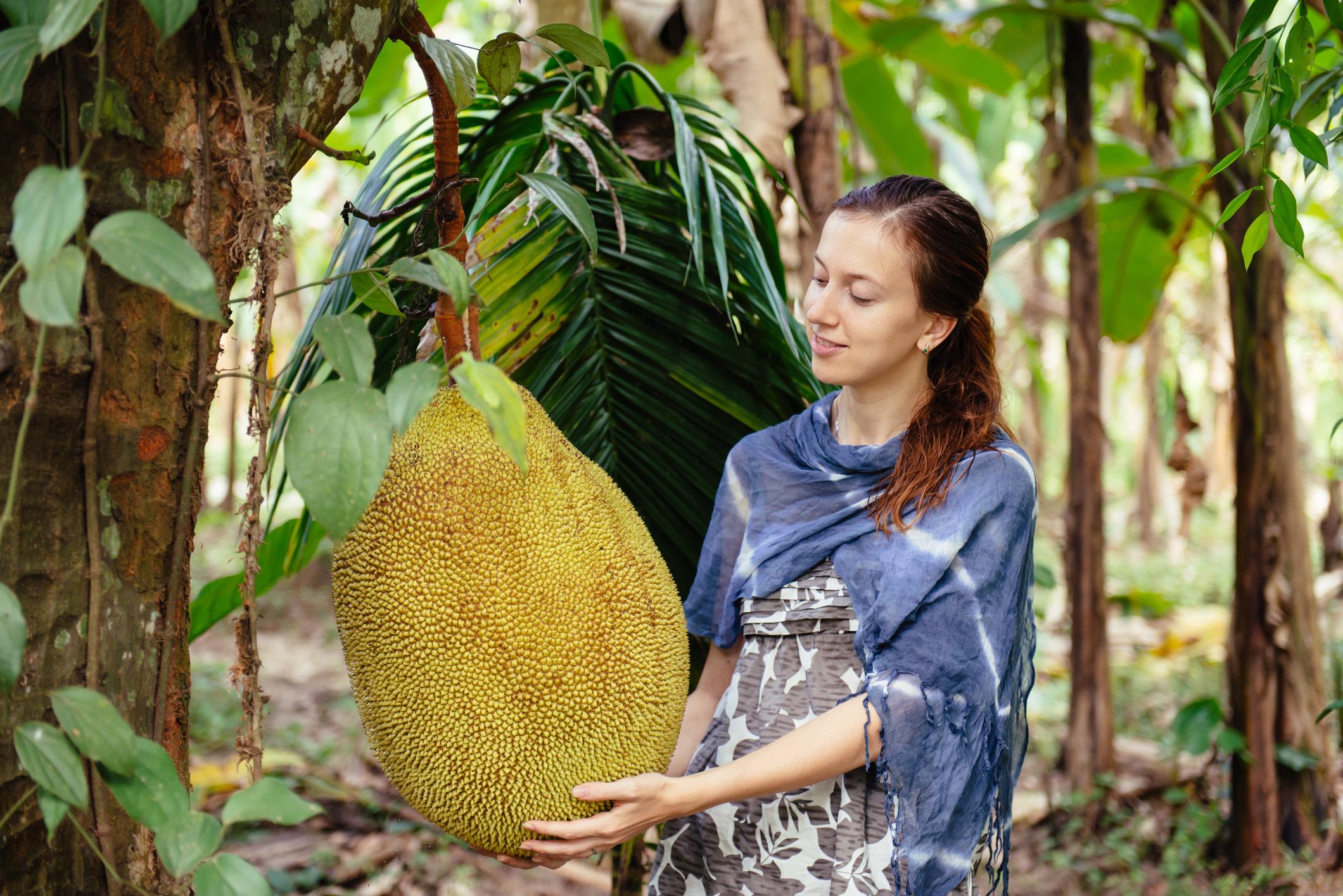 jackfruit или хлебно дърво - плодът, с който може да преборите рак