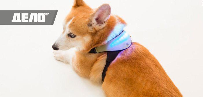 каишка за кучета издава мислите им