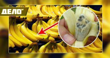 болест по бананите