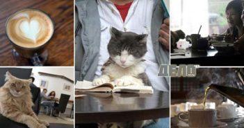 откриха кафене за котки в Санкт Петербург