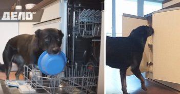куче подрежда елха и чисти кухнята
