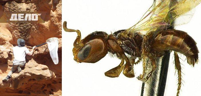 учени откриха нови 9 вида пчели