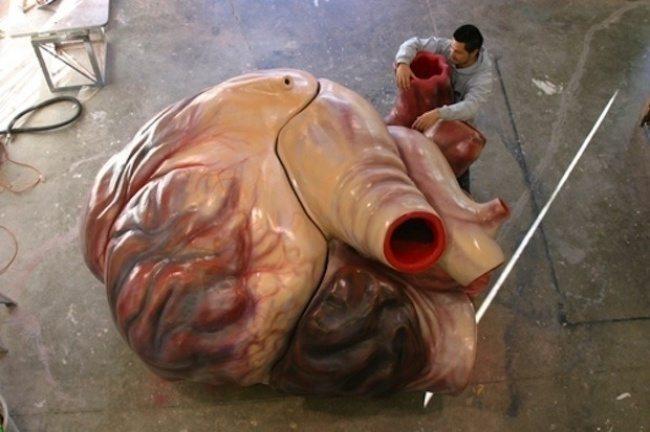 любопитни факти, сърцето на синия кит