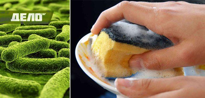 бактерии по кухненските гъби сеят зарази