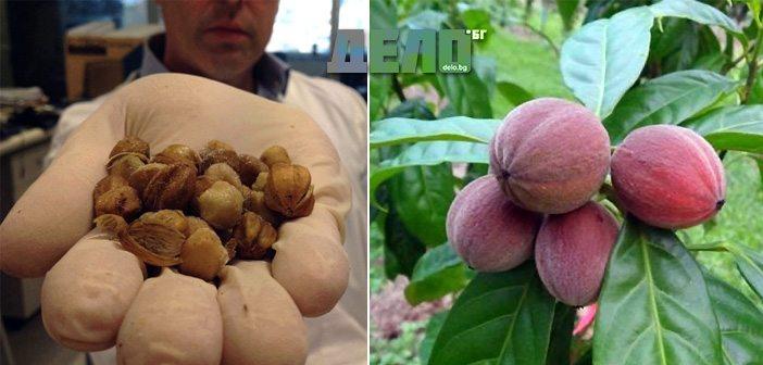лекарство от чудно растение бори рак