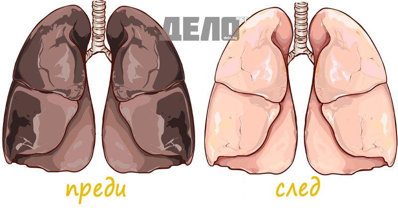 винен камък чисти токсини