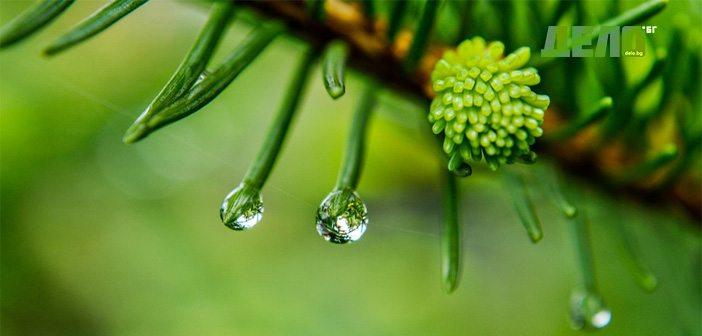 песни за дъжда