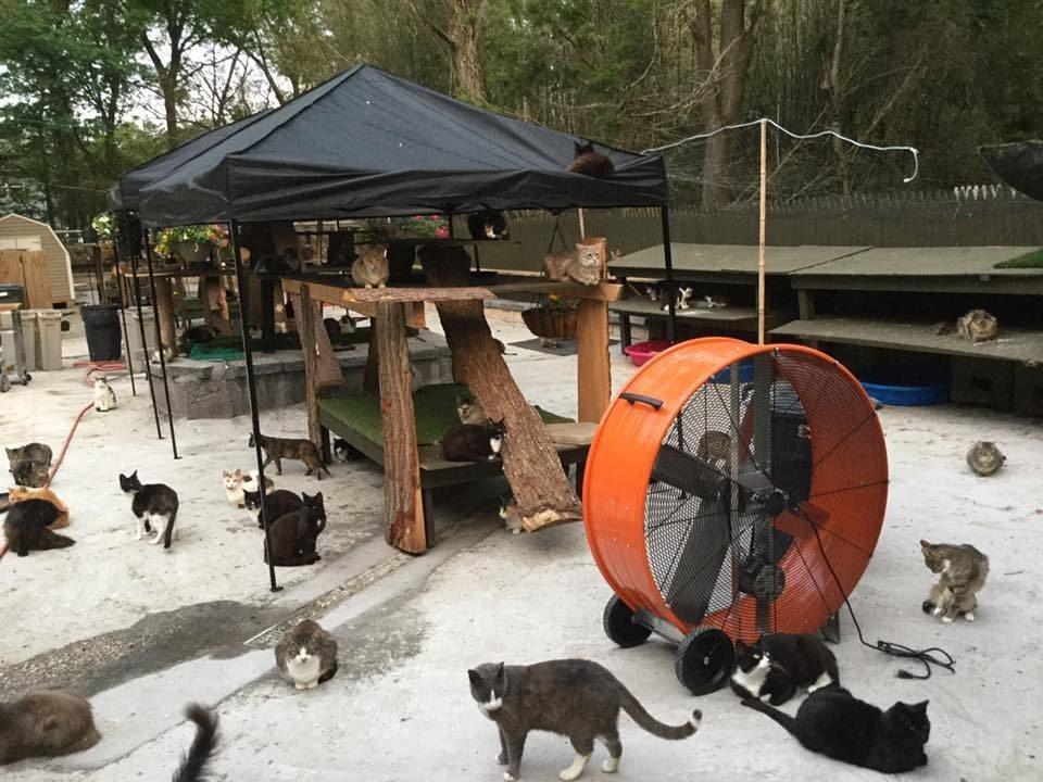 рай за 300 котки