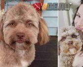 Куче с човешко лице – новият хит в интернет