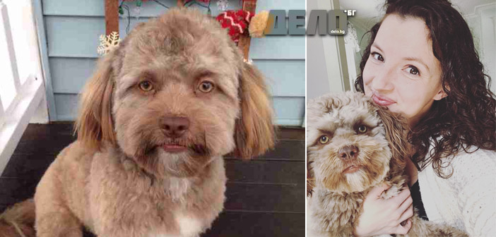 куче с човешко лице
