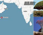 Остров Сокотра – отправен мираж за Оман и Судан