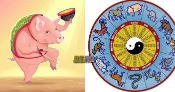 годината на свинята
